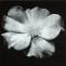 Fernando Bermejo. Rosa. 2002-2003. Pintura/papel italiano-japonés/caja de luz. 90 x 90 x 15 cm