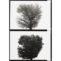 Rafael Navarro. Díptico #14. 1978. Fotografía/papel baritado virada al sulfuro. Ed. 50ejs. 25,9x17,8cm