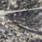 Gyorgyi Suta. Escaleras. 2008. Tinta china y pigmentos naturales sobre papel seda. 195x130cm